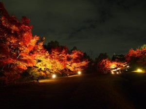 梅小路公園 朱雀の庭 ライトアップ