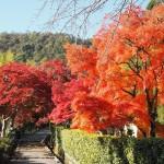 後亀山天皇陵参道 11月23日