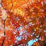 嵐山公園 11月23日