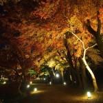 大覚寺 ライトアップ 11月23日