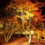 妙覚寺 初のライトアップ 11月