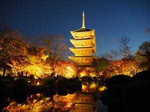東寺 ライトアップ 11月