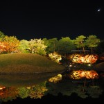 梅小路公園 朱雀の庭 11月24日