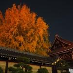 西本願寺 11月24日