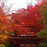 浄瑠璃寺 11月24日