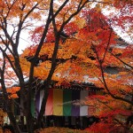 今熊野観音寺 11月24日