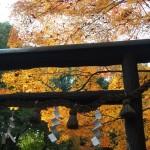 野宮神社 11月24日