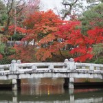 円山公園 11月25日