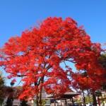 愛宕・野宮神社御旅所 11月25日