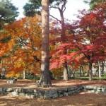 相国寺 11月