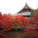 妙覚寺 11月