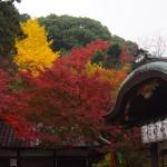 粟田神社 11月26日