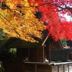 日向大神宮 11月26日