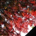斉明神社 11月26日