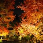 勝林寺 11月