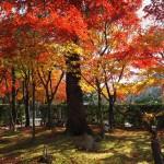化野念仏寺 11月27日