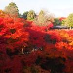 東福寺 11月
