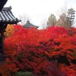 東福寺 11月27日