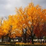 東本願寺 11月27日