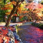 上賀茂神社 11月27日