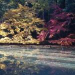 紅葉谷庭園 11月