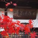 甘南備寺の紅葉
