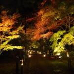 鹿王院のライトアップ