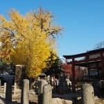 大将軍神社 11月28日