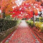 後亀山天皇陵 11月28日