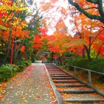粟田神社 11月28日