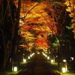 鹿王院 ライトアップ
