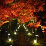 鹿王院 ライトアップ 11月