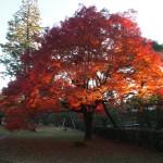 京都御苑 11月29日