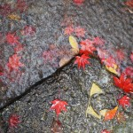 不動の滝 11月29日