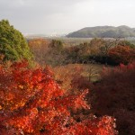 大山崎山荘美術館 11月