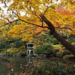 白河院庭園 11月30日