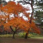 京都御苑 11月30日