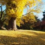 京都御苑 凝華洞跡