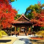 梨木神社 11月30日