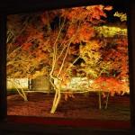 妙覚寺 ライトアップ 11月30日