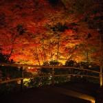 北野天満宮 ライトアップ 12月1日
