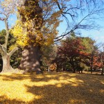 京都御苑 12月2日