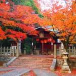 竹中稲荷神社 12月2日