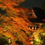 金戒光明寺 ライトアップ 12月3日