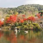 円山公園の紅葉 12月4日