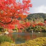 円山公園 12月4日