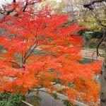 金井戸神社 12月4日