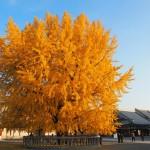 西本願寺 12月