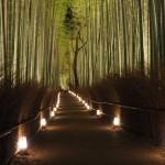 嵐山花灯路 12月