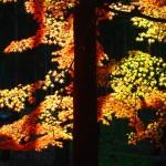 東福寺 12月7日